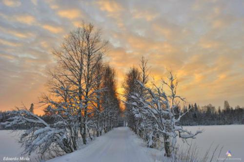 Swedish Lappland Landscape