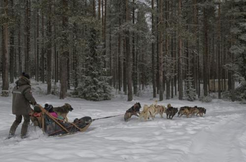 Accessible dogsledding with huskies